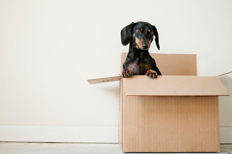 Does Moving Up Make Sense?
